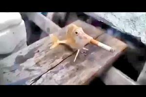 Cina, pescatori costringono un pesce a fumare