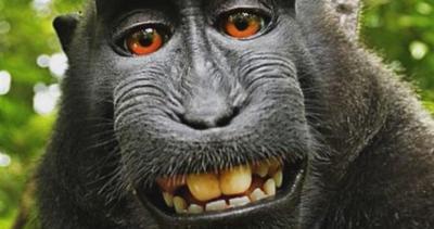 Il selfie del macaco, rivoluzione nel copyright?