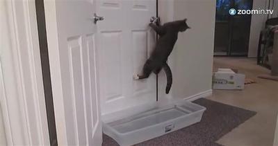 Il gatto che apre le porte