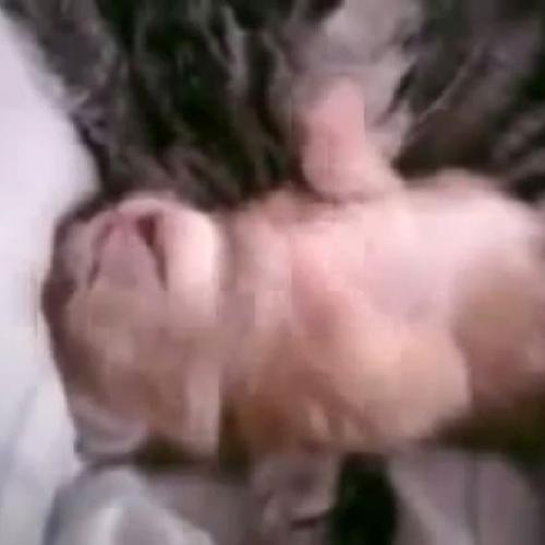 Il cucciolo di gatto muove le zampe mentre sogna