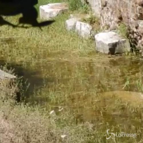 Ancora pieno d'acqua il fossato del Mausoleo di Augusto     ...