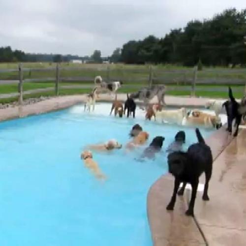 La festa dei cani in piscina