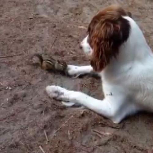 Lo scoiattolo mangia la noce tra le zampe del cane