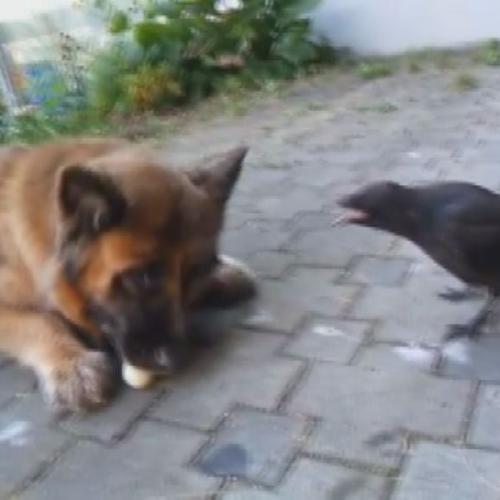 Cane e corvo giocatori di ping pong provetti