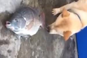 Un cane cerca disperatamente di salvare un pesce