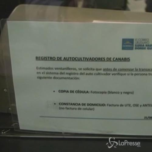 In Uruguay aperto il registro ufficiale dei coltivatori di ...