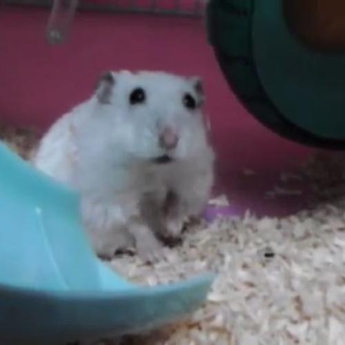Il topo pigro fa ginnastica, ma da sdraiato