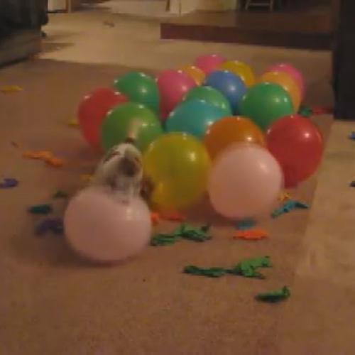 Strage domestica, il cane killer di palloncini