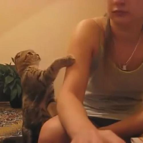 Il gatto coccolone che bacchetta la padroncina assenteista  ...