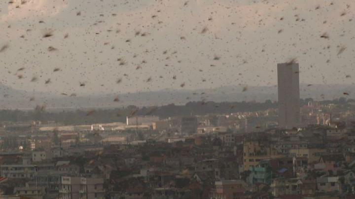 In Madagascar invasione di cavallette, e il cielo diventa ...