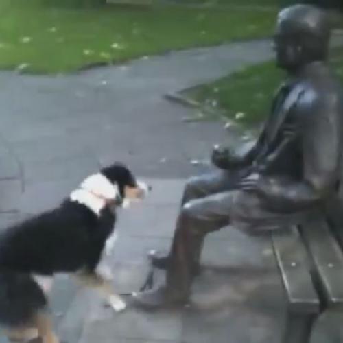 Cane cerca di giocare al riporto con una statua