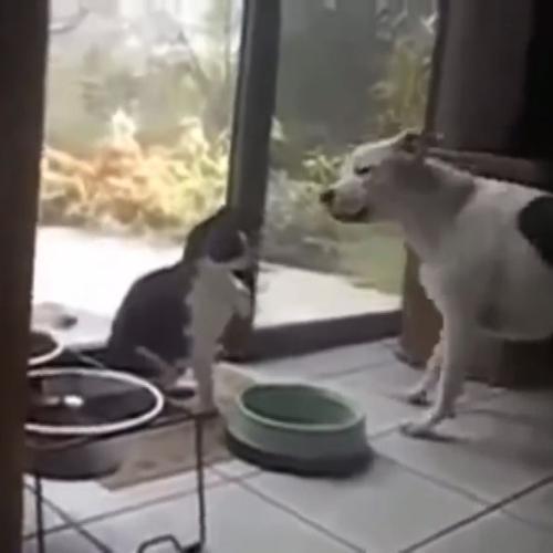 Il gatto fa la boxe contro il cane per difendere il suo ...