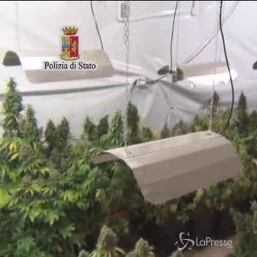 Blitz a Palermo: scoperti arsenale e piantagione marijuana  ...