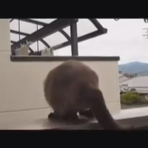 Il gatto alato