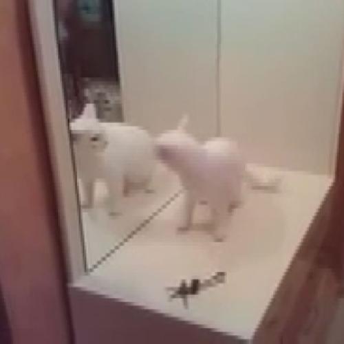 Il gatto che combatte contro se stesso