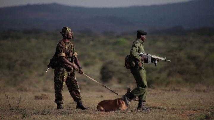In Kenya armi e droni per difendere gli animali
