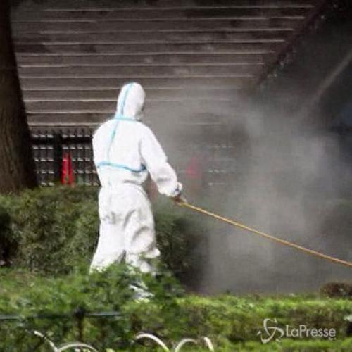 Giappone, altri 19 casi di febbre tropicale dengue ...