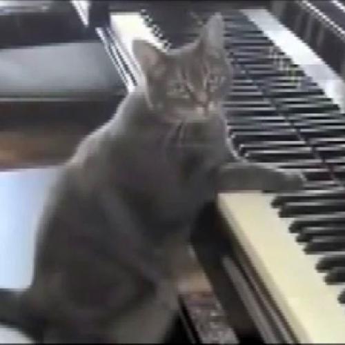 Il gatto che suona il pianoforte come Beethoven, prego ...