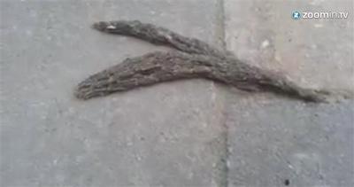 Sembrano due serpenti, e invece...