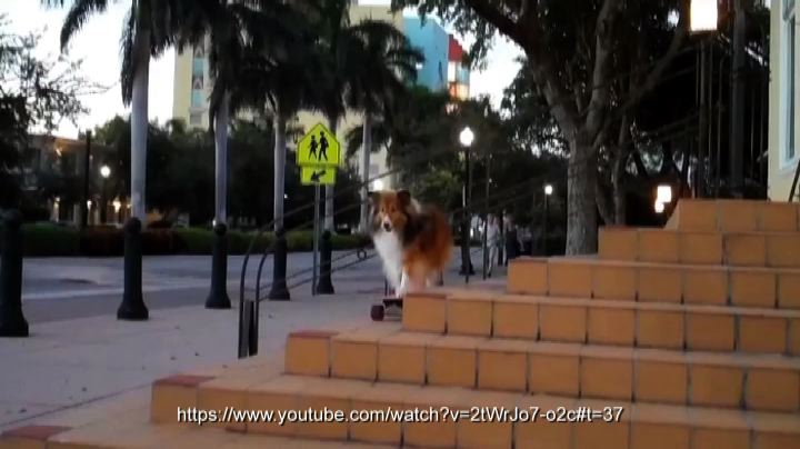 Supercane sullo skateboard