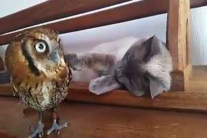 La strana coppia, gufo e gatto amici per caso
