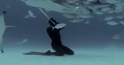 Danzando con gli squali