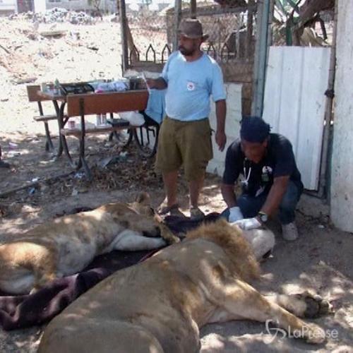 La guerra a Gaza vista dagli animali, situazione critica in ...