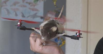 Droni animali: non solo gli uccelli volano