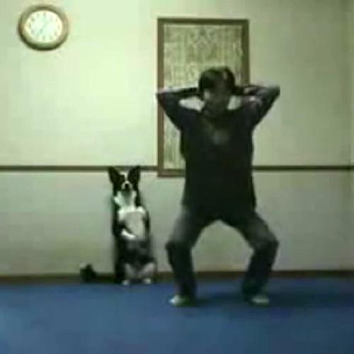Una sessione di aerobica canina