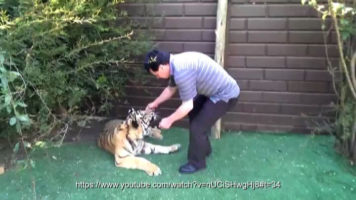 La tigre dal dentista