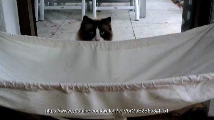 Il gatto che amava l'amaca