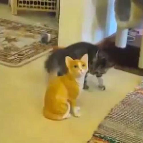 Gattino scambia la statua di un felino per un micio con cui ...