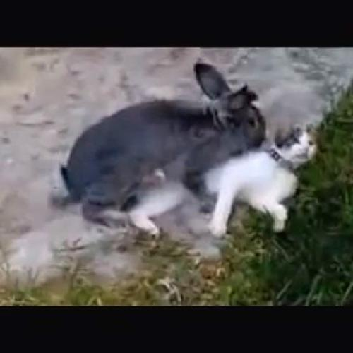 Travolgente storia d'amore fra un gatto e un coniglio, ...