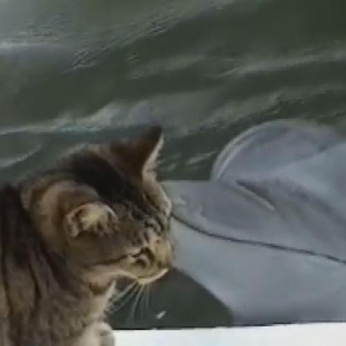 Quando fra un gatto e un delfino è vero amore..