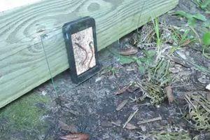 Vermi sul display dello smartphone, decine di rane si ...