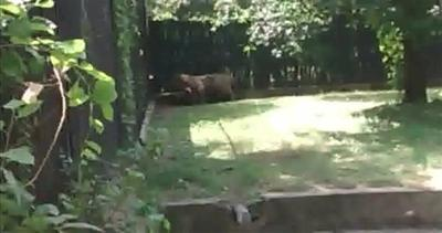Orrore allo zoo di Delhi, ragazzino ucciso da una tigre     ...