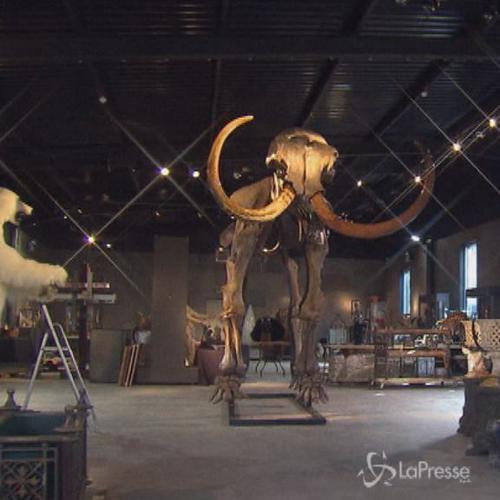 Londra,messo all'asta scheletro di mammut:costa almeno ...