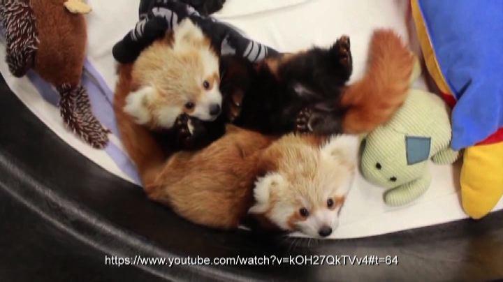 Gemellini di panda rosso
