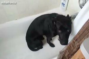 Cani con il senso di colpa, dopo aver fatto dei danni si ...
