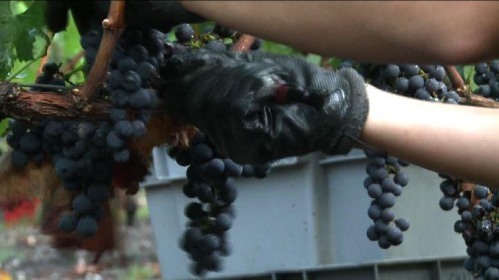Un'annata ideale per il Bordeaux