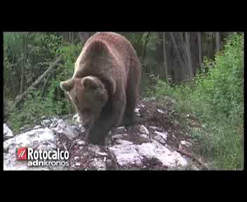 L'Italia... è un Paese per orsi