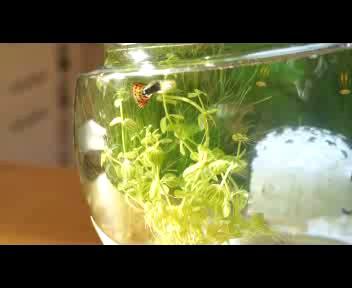 L'acquario intelligente? Fa tutto da solo