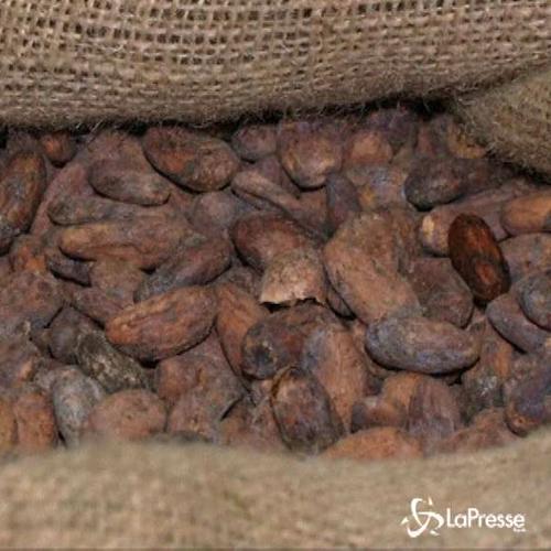 Perù, a Lima il museo del cacao, fra storia e prelibatezze ...