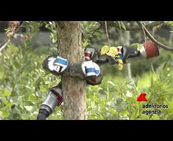 Ecco i robot - serpenti che si arrampicano e nuotano