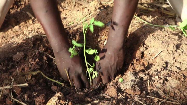 """In Mali i """"miracoli"""" dell'agricoltura tradizionale africana ..."""
