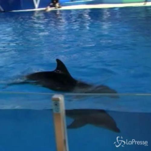 Cucciolo di delfino nato nel parco marino nazionale della ...