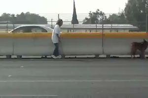 Cane impaurito al centro di un'autostrada, ...