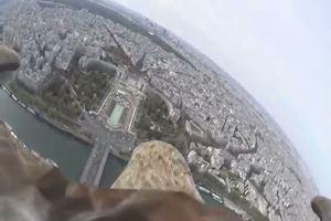 Aquila in volo su Parigi, le spettacolari immagini