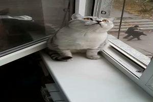 Ha puntato la preda e nulla può distrarlo, il gatto sembra ...