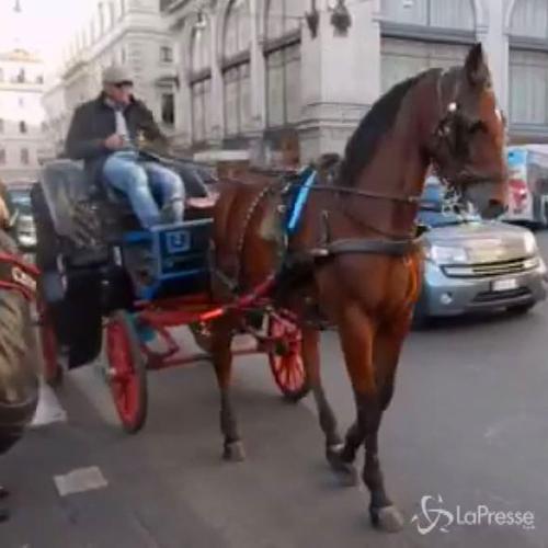 Cavallo delle botticelle romane stramazza a terra in via ...